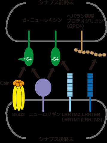 蛋白質複合体解析研究分野 | 東...